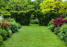 It is also important to you that your backyard grass is properly cared for and up to par. The best tips for maintaining backyard grass can vary by region. Bush Garden, Lawn And Garden, Garden Grass, Planting Bulbs, Planting Flowers, Back Gardens, Outdoor Gardens, Landscaping Las Vegas, Landscaping Work