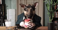 Odin the adorableGerman Shepherd eats like ahuman! Thevideo of this adorableGerman Shepherd eating some peanut butter and dressed in a suit went viralwith a number of2,405,468 views and counting since it was posted lastMar 25, 2013. In the video you'll seeOdin's head poking out of his coat and tiewith human arms coming out of his …