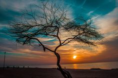Photograph Wilting of her branches even her death , was not the end ~ by Amjad Alomari on 500px