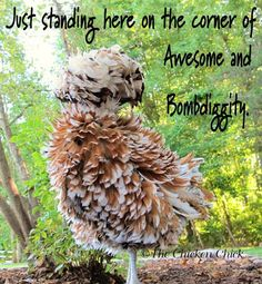 Just standing here on the corner of Awesome and  Bombdiggity. ~The Chicken Chick
