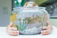 Some things are classics. Take the fishbowl, for example.  Or rather, the fishbowl technique of involving your clientele in your business. Read about it on the AuntieKate blog It's a retail and consignment classic because it works.