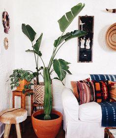 Cenário com foto nas plantas, almofadas e panos sofá