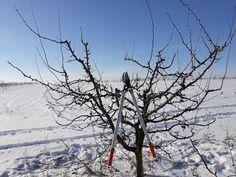 Curatarea pomilor de prun ( taieri la prun) II - YouTube Fruit Trees, Grape Vines, Gardening, Outdoor, Youtube, Agriculture, Plant, Life, Outdoors