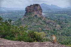 La había visto mil veces en fotos y tampoco me impresionaba. Hasta que estás frente a ella y ahora sí entiendes porqué es el símbolo de #srilanka: la #rocadelLeon por algo es #patrimoniohumanidad  #srilankamehizoami