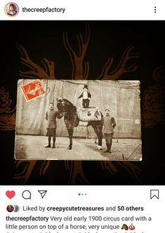 Water For Elephants, Vintage Circus, Moose Art, Horses, Unique, Animals, Animaux, Horse, Animal