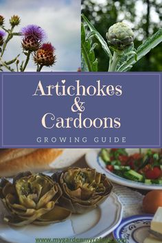 Growing Artichokes, Artichoke Plants, Big Plants, Central Texas, Plant Needs, Potting Soil, Autumn Garden, Cousins, Gardening