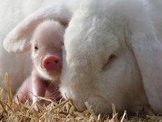 Cute animal pictures: 100 of the cutest animals! - Cute animal pictures: 100 of the cutest animals! Cute Creatures, Beautiful Creatures, Animals Beautiful, Sea Creatures, Cute Baby Animals, Animals And Pets, Funny Animals, Wild Animals, Farm Animals