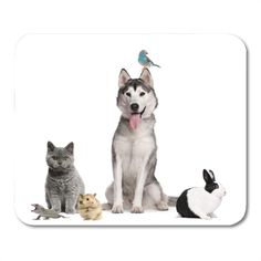 Group Of Dogs, Photo Grouping, Animals Images, Dogs And Puppies, Husky, Digital Prints, Photo Editing, Rabbit, Stock Photos