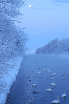 Beautiful winter World, Hokkaido, Japan. I LOVE SWANS!!!!!