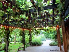 Barn terrace & grape arbor ~ gorgeous!