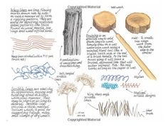 Creating Textured Landscapes with Pen, Ink and Watercolor: Claudia Nice: 9781440318566: Amazon.com: Books