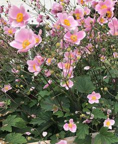 Best Indoor Garden Ideas for 2020 - Modern Hydrangea Seeds, Hydrangea Care, Hydrangea Flower, Fall Plants, Garden Plants, Indoor Plants, Plantes Alpines, Alpine Plants, Garden Types
