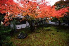 仁和寺 黒書院前 紅葉 見ごろ 秋 京都