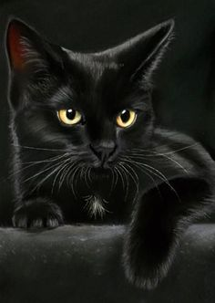It's important to note that, because of the myths of cats and Halloween, many cats–particularly black cats–may be in danger on Halloween night. Unfortunately, black cats are sometimes targeted… I Love Cats, Crazy Cats, Cool Cats, Beautiful Cats, Animals Beautiful, Baby Animals, Cute Animals, Gatos Cats, Photo Chat
