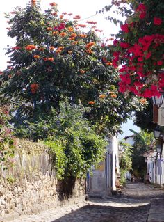 *🇧🇷 Colourful laneway (Paraty, Rio de Janeiro, Brazil) by Marcos Paluello / 🌸 Places To Travel, Travel Destinations, Flowering Trees, South America, Summertime, Environment, Architecture, Street, City