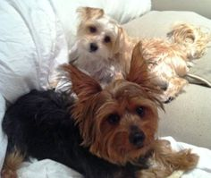 PetRelocation.com moved my dogs for me! (Example Pin for Compendium Newsletter)