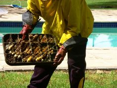Bee removal in Johannesburg , bees in a meter box in The Links street morningside