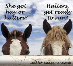 this is totally one of my horses - tho he usually runs regardless, just to be safe!