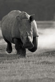 Wild life black and white photography.