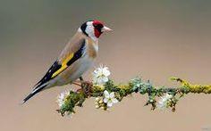 Resultado de imagen para aves hermosas en la naturaleza