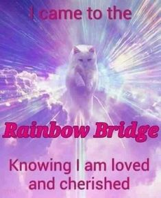 I came to the Rainbow Bridge ~ knowing I am cherished.