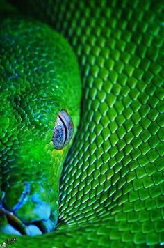 Cold blooded #snake #green #reptile