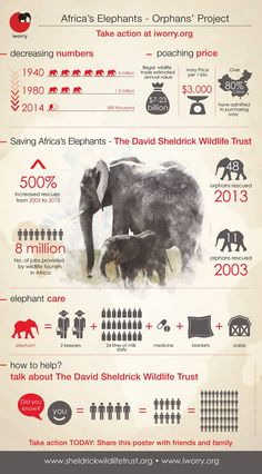 'Africa's Elephants in Numbers' Please share this crucial info-graphic to help better raise awareness for elephants, both wild and orphaned, at threat due to illegal ivory poaching. Thank you. The David Sheldrick Wildlife Trust, produced in collaboration with iWorry