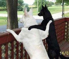 Google Image Result for http://rheto.files.wordpress.com/2009/01/two-dogs-hugging-771235.jpg