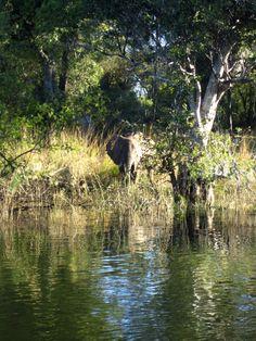 Rhodesia, (now Zimbabwe) (no attribution - apologies to the photographer...)
