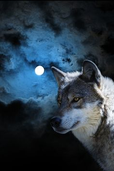 lonely wolf moon night blue