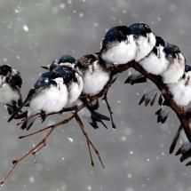 I love these cute and tiny creatures. The birds are really beautiful. I think the birds define the nature. When I see the birds especially in winter I feel excited and happiness because both the bi… Pretty Birds, Love Birds, Beautiful Birds, Animals Beautiful, Cute Animals, Wild Animals, Baby Animals, Nature Pictures, Animal Pictures