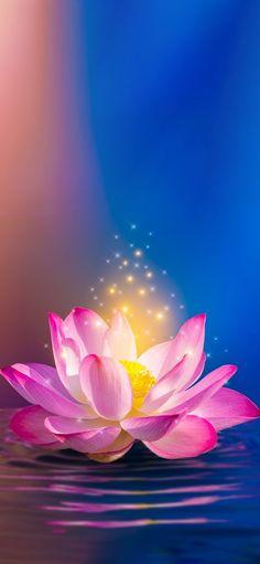 Beautiful Sunset, Wallpaper, Disney, Flowers, Plants, Wallpapers, Plant, Royal Icing Flowers, Flower
