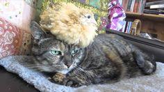 【動物】猫とウズラ