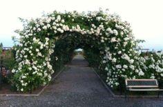 Top 10 cele mai frumoase locuri nestiute din Romania Sidewalk, Rose, Plants, Foundation, Gardens, Pink, Roses, Sidewalks, Plant
