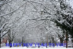 Awesome Happy new year forest wish