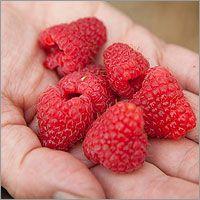 Raspberries to boost fertility?