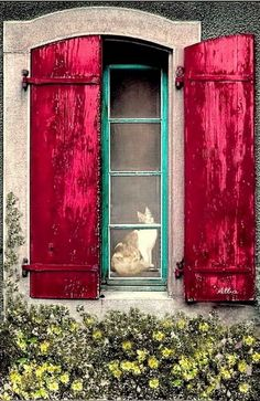 kitty in window with red shutters Old Windows, Windows And Doors, Red Shutters, Through The Window, Window View, Old Doors, Window Boxes, Doorway, Stairways