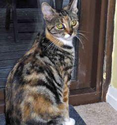 All+Mixed+Cat+Breeds | Mixed Breed Cats - 95 - by Megan