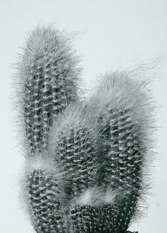 Cactus 1 from the Cacti series by Paris-based American photographer Peter Lippmann. via the artists site
