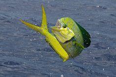 BoatUS Magazine: Tips For Taking Better Fishing Photos