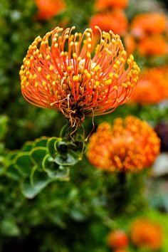Flowers in Big Sur California // localadventurer.com