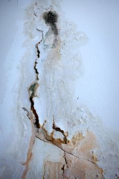 5 Things You Should Know About Toxic Mold Illness. The awareness of toxic mold's effect on human health has increased dramatically over the past few years. But #mold is only one of the many biotoxins found in water-damaged buildings, and the illness caused by exposure to these #toxins is much more complex than most clinicians and patients assume.