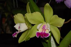 Only Orchids: September 2007