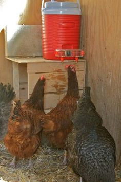 Chicken Waterer Station - DIY Ideas