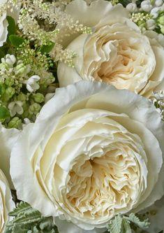 Красивые Розы, Красивые Цветы, Экзотические Цветы, Фиолетовые Цветы, Цветки Орхидеи, Голубые Розы, Красные Розы, Белые Цветы, Цветочные Композиции
