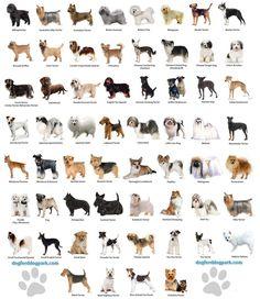 E conhece todos as raças de cães que existem.