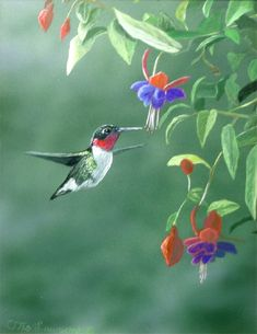 paintings of hummingbirds   Spring Delight - Hummingbird by Otto Lawson