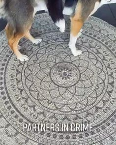 Funny Animal Memes, Dog Memes, Funny Animal Pictures, Cute Funny Dogs, Cute Funny Animals, Dog Breeds Little, Cute Animal Videos, Cute Little Animals, Happy Animals