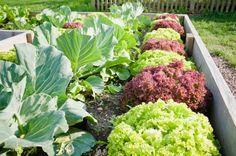 Milyen növényeket ültessünk a magaságyba?