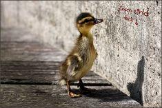 Können Enten lesen? von Günna S.